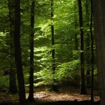Réserve forestière